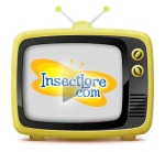 Insect Lore was featured on ABC TV KERO in Bakersfield, CA