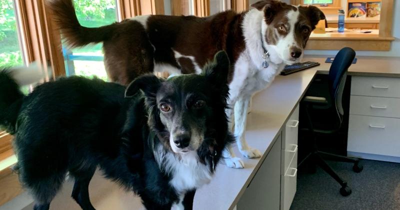 KidStuff PR office dogs