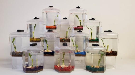Each one-gallon tank comes with a live bamboo stalk, bioactive sand, colored gravel plus several decorative rocks, so it's a miniature ecosystem that is practically self-sustaining. African Dwarf Frogs are very small.
