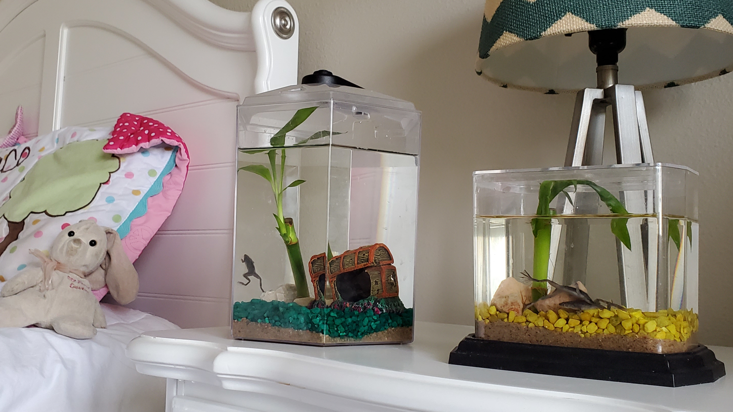 Froggy's Lair Makers of the Froggy Biosphere homes with African Dwarf Frogs🐸